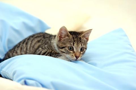 bedding encasement, protect against pet