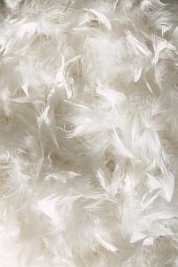 goose down, pure white