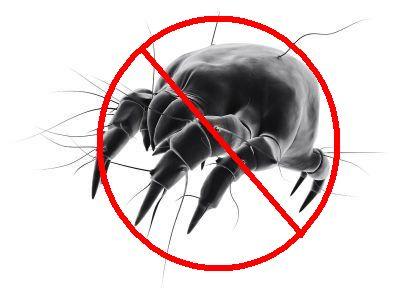goose down dust mite, dust mite