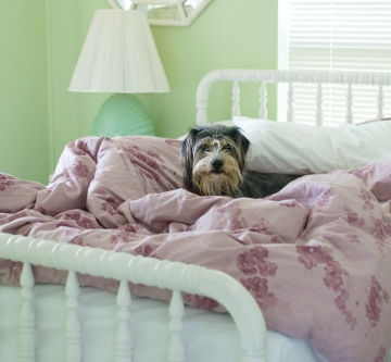 feather bed covers to protect against pets